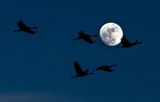 Linnuvaatlus öösel - 8. oktoober 2021